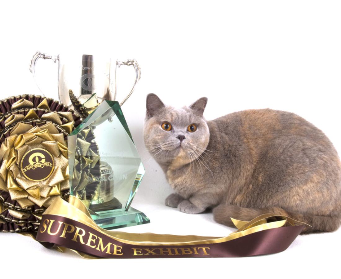 Supreme Olympian Silver UK & Imperial Gr Pr Pinemarten Tina Sparkle